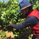 Exploring with Eduardo: Chardonnay, the chameleon grape